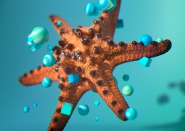 Ronald Fong 3D Starfish Render